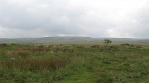 Scorhill tree - 300dpi