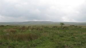 Scorhill tree - 72dpi